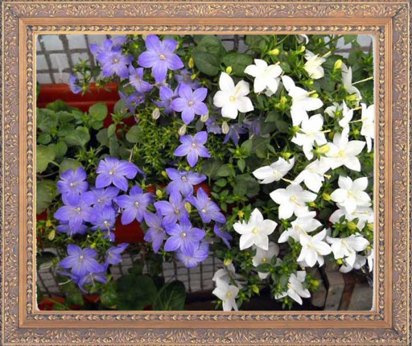 Aliexpress 2900pcs flower seeds 16 varieties packed