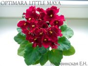 Сенполии Optimara Little Maya