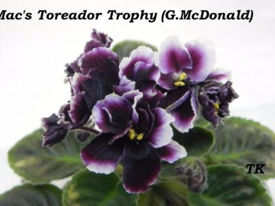 Сенполии Mac's Toreador Trophy