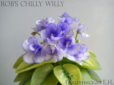 Сенполии Rob's Chilly Willy