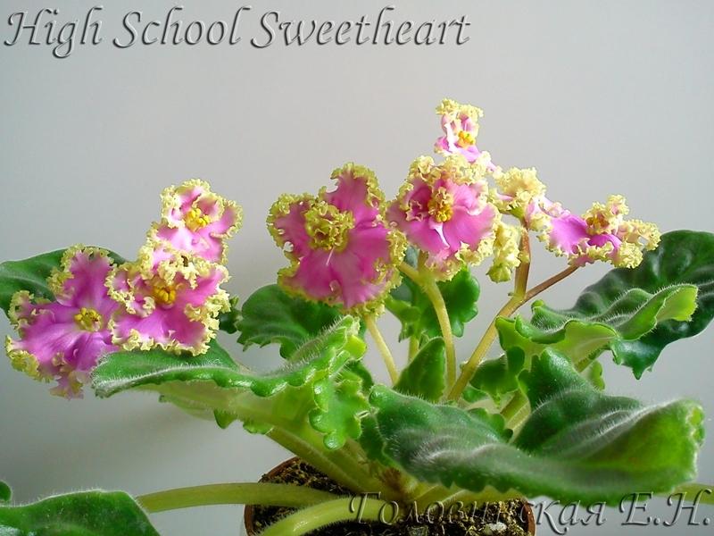 highschool sweetheart